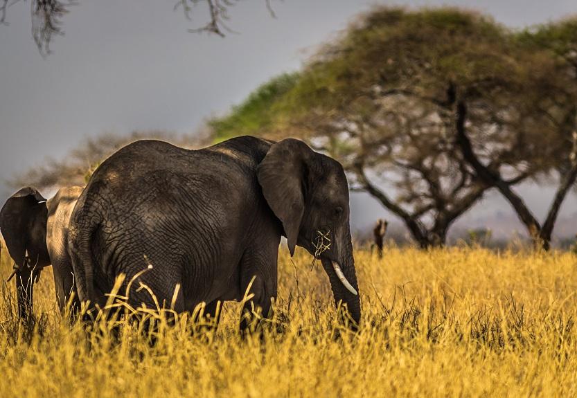Detalhes do turismo de Safaris na África